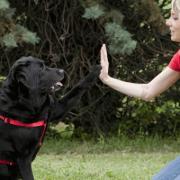 comunicazione animali